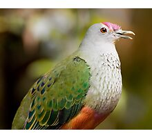 Rose-Crowned Fruit Dove Photographic Print
