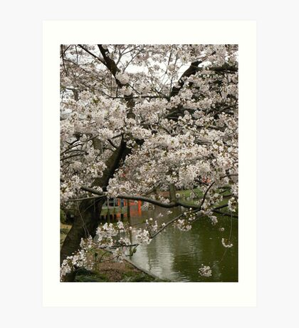 Cherry blossoms and temple gate Art Print