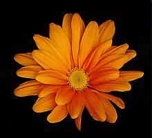 orange delight by Rodney55
