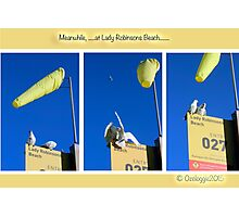 The locals of Lady Robinsons Beach  Photographic Print
