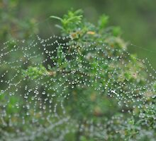 web of jewels by Becsnel