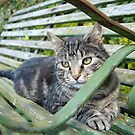Tabby on a bench by sarahnewton