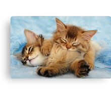 Sleepy kittens Canvas Print