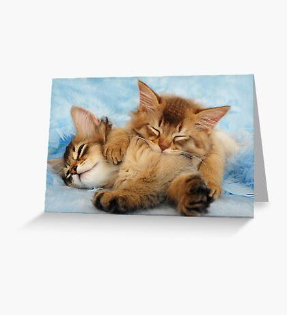 Sleepy kittens Greeting Card