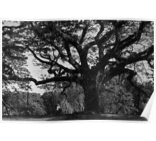 Aged. Tree. Man Poster