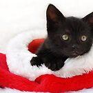 black kitten in a santa hat by sarahnewton