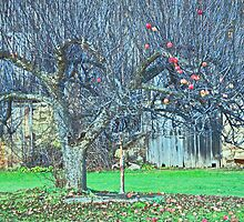 Old Apple Tree by Wabacreek Photography
