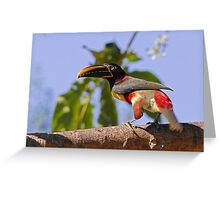 This araçari did not like the camera! Greeting Card