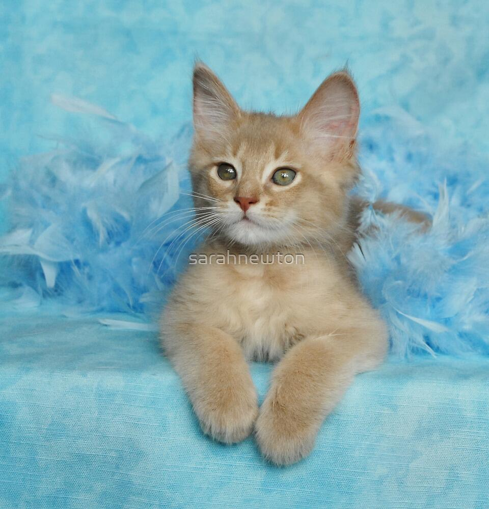 fawn somali kitten in blue feathers by sarahnewton