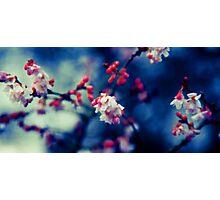 Summer Blossom Photographic Print