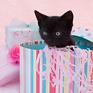 Birthday kitten by sarahnewton