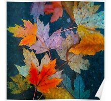 Autumn leaves on a dark background Poster