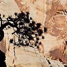 Zion Tree and Rock Silhouette, Checkerboard Mesa, Utah by Alan C Williams