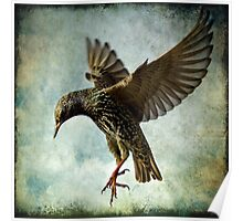 Textured Starling Ballet Poster