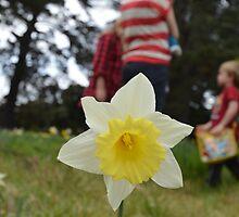 Daffodill by mosgol