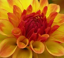 Yellow starburst by Kathy Yates