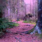 Magic in the forest by ienemien