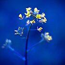 blues by Carol Yepes