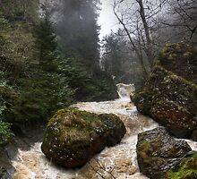 Roaring river  by Erdj