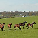 galloping horses by sarahnewton