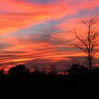 Firey Skies by Kathy Yates