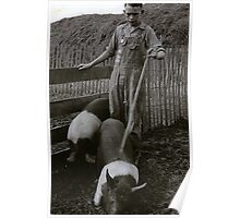 Robert Sprout  with his Iowa State Fair Blue Ribbon Award and hogs. Around 1931? Poster