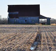 Late November Farm Scene by mltrue