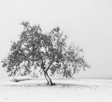 Whiteout by Becky39