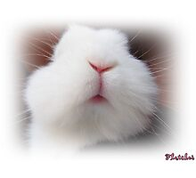 A sweet kiss for you Photographic Print