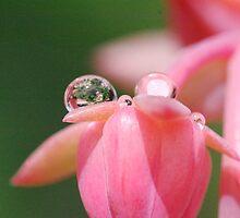 In The Rain Drop by MissyD