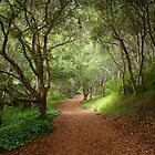 Forest Trail, Carmel, California by Maria Draper