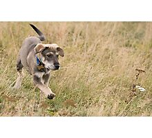 Puppy in the grass Photographic Print