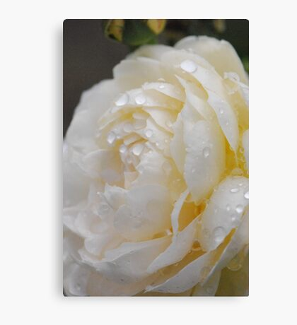 Bathed In Rain Drops Canvas Print