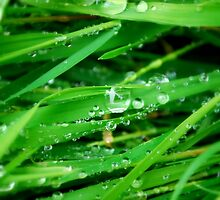 Drops on Grass by Paul Finnegan