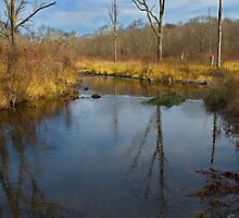 Flatbrook Stream during Pheasant Hunting Season by Anthony  Romano