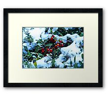 Holly Bush Covered in Snow Framed Print