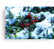 Holly Bush Covered in Snow Canvas Print