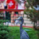 Blue Heron in the Watergarden by JenniferJW