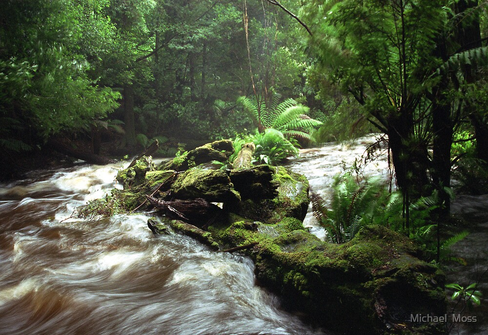 Below Russell Falls - Tasmania by Michael  Moss