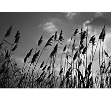 Through the Reeds Photographic Print