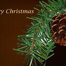 Christmas Acorn by artsthrufotos