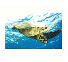 Green Turtle on the Great Barrier Reef Art Print