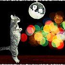 Disco Cat by colleen e scott