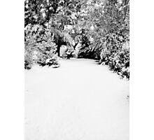 Solitude - Winter Landscape Collection 2009 - Montana Photographic Print