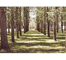 The Rows Photographic Print