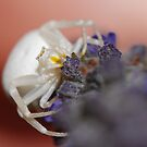 Little White Spider by Kat36