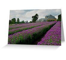 Lavender Farm Daylesford Victoria Greeting Card