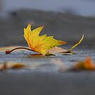 Lonely leaf by Heather Thorsen