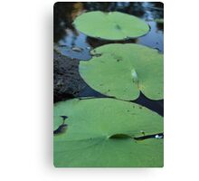 lilly pad trilogy Canvas Print