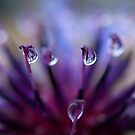 Striped Rain Drops by Jenni77